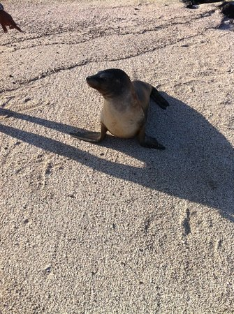 Villa Flamenco Beach :                   what is this seal doing on flAmenco beach
