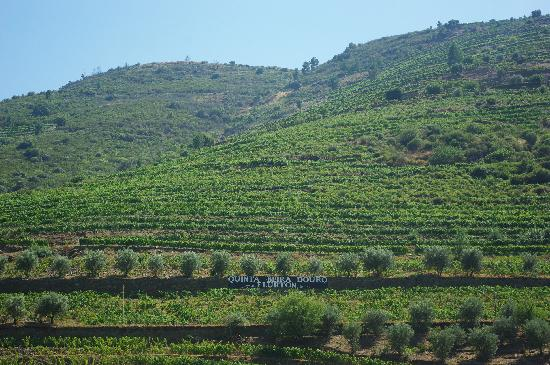 breathtaking views of the Douro valley from the boat