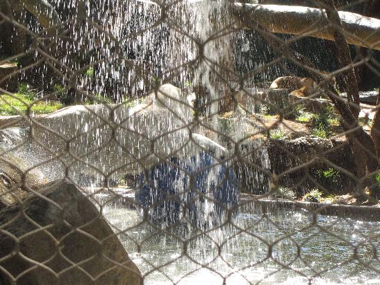 Playing In The Water Picture Of Siegfried Roy 39 S Secret Garden And Dolphin Habitat Las