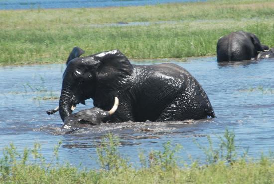 Botswana: Chobe river Chobe