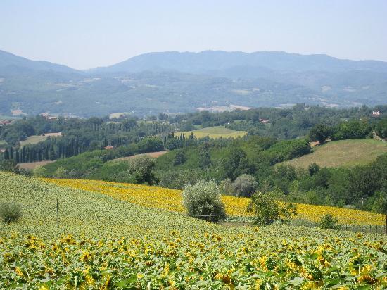 Agriturismo Fattoria I Ricci: Scenery near Fattioria I Ricci