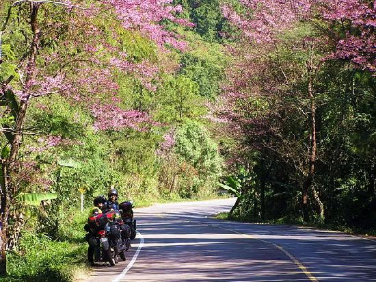 Mae Hong Son Loop : Blooming flowers on the hills!