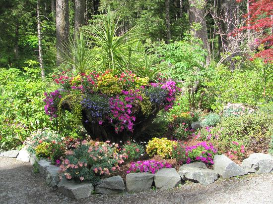 Landscaping Picture Of Glacier Gardens Rainforest