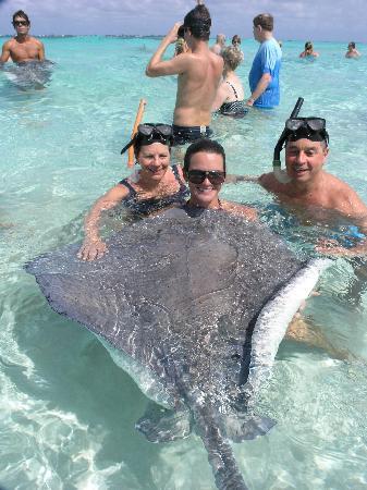 Grand Cayman Marriott Beach Resort Swimming With The Stingrays