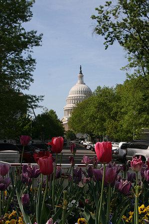 Context Washington Tours: Context tours of DC explore the city through a scholarly lens