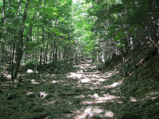Prospect Mountain: Easy part of the trail.