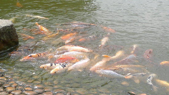 Хассельт, Бельгия: Hungry fish