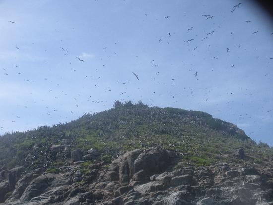 Los Testigos Islands, Venezuela: Aves en el Archipielago de los Testigos