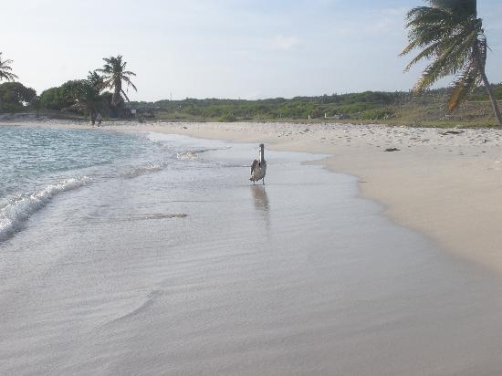 Острова Лос-Тестигос, Венесуэла: Playa del Archipielago de los Testigos