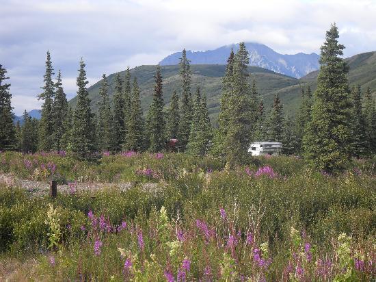 BluesBerry Inn : The mountains behind the cabin