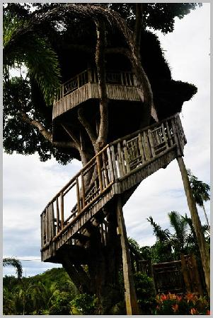 Rafael Farm: Treehouse