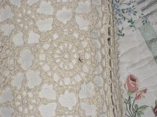 Spicer Castle Inn: dead bug on accent pillow