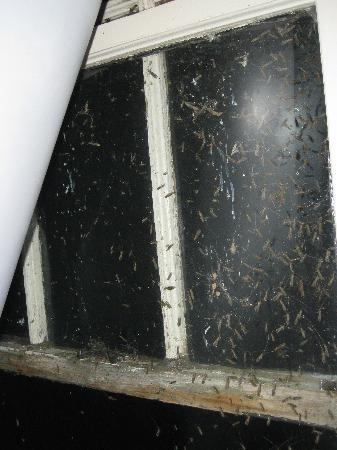 Spicer Castle Inn: bugs in Ruth's room