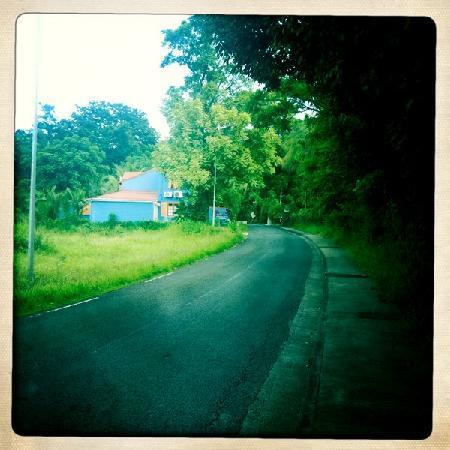 Passion Creole : Passion Créole vue de la route, la petite maison aux volets oranges