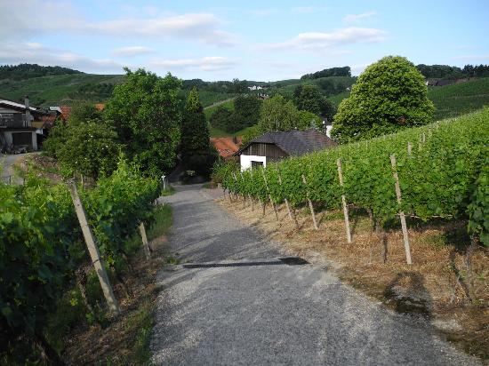 Rebstock Waldulm: They have their own wineyard