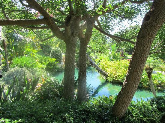 Barcelo Asia Gardens Hotel & Thai Spa: Vegetación