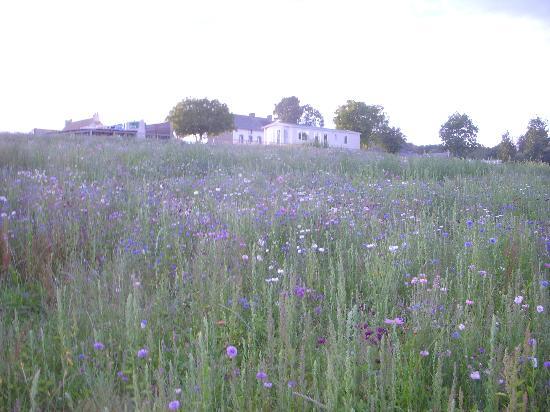 Siblu Villages - Domaine de Litteau : View of site from road