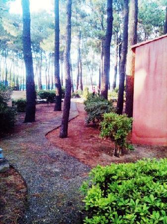 Borgo, Francia: la pinède