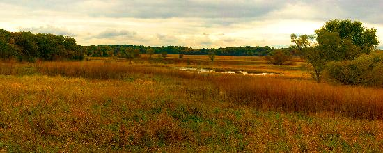 Spring Grove, IL: Panoramic view of the wetlands