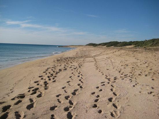 Manduria, Italie : Spiaggia con strato di conchigli