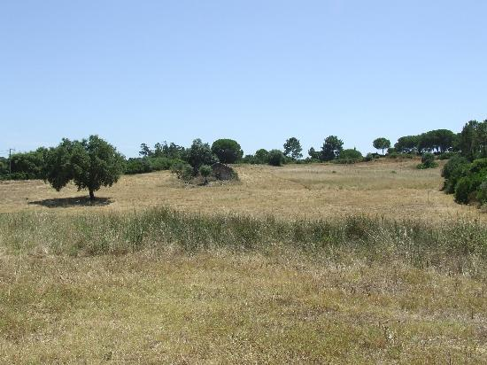 Monte dos Carotos: The hay field at front of the house