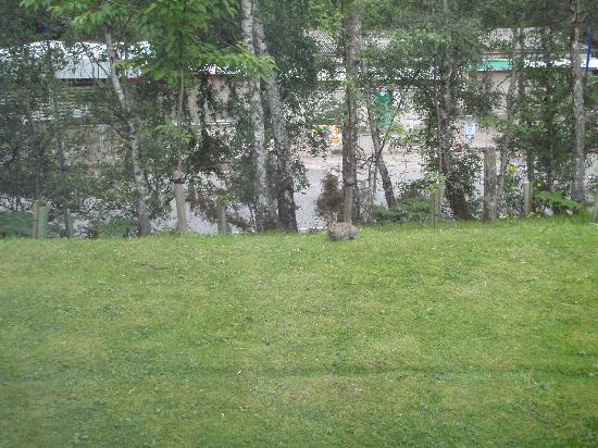 High Range Hotel: View from my room with bonus rabbit