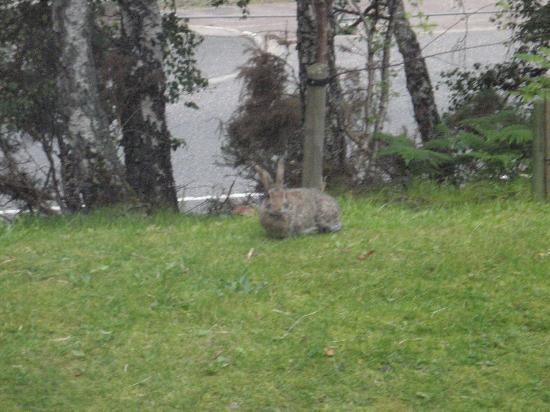 High Range Hotel: The rabbit outside my window