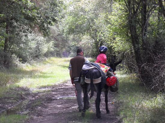 Les ânes de Madame: Balade avec Mlle Berthe