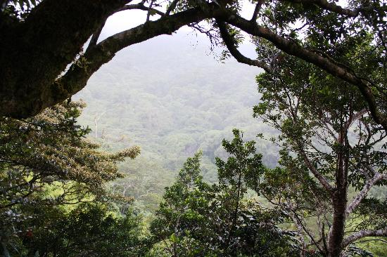 Hidden Canopy Treehouses Boutique Hotel: Neverland balcony view