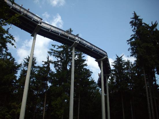 Waldwipfelweg Picture