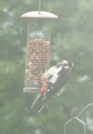 Ringehay Farm Holiday Cottages: The woodpecker