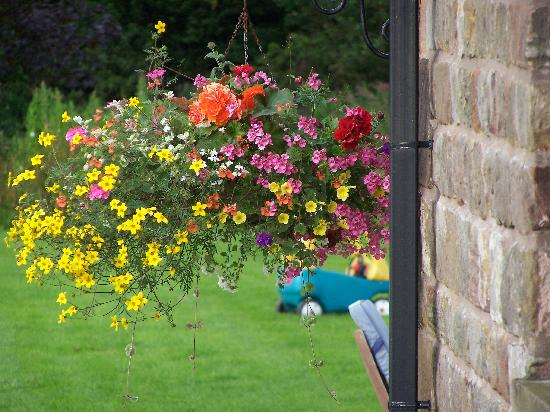 Ringehay Farm Holiday Cottages: One of the many floral displays