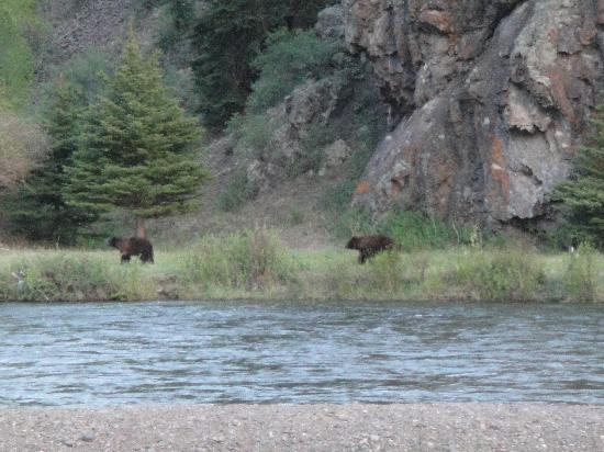 Cottonwood Cove: Rare and lucky sighting of a couple of young bears behind the riverside cabins.