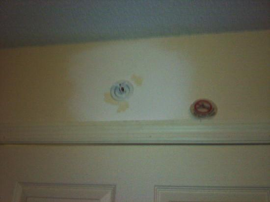 La Quinta Inn Tampa Near Busch Gardens: A patch near the sprinkler over bathroom.