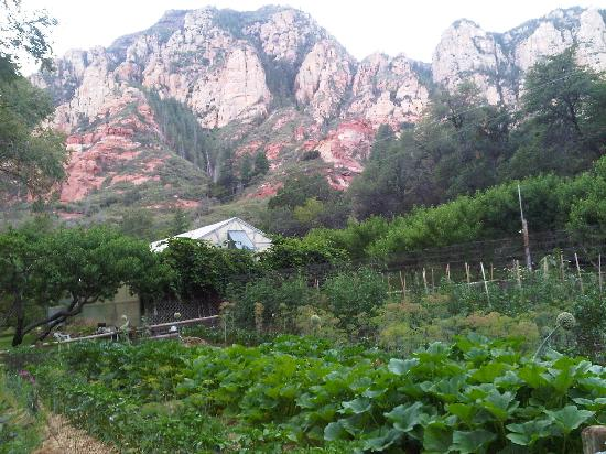 Orchard Canyon on Oak Creek: Organic vegetable garden