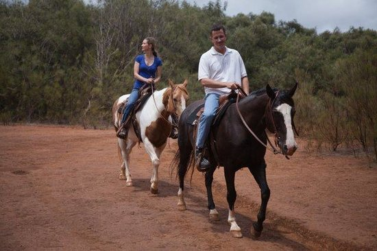 The Stables at Koele: GUIDED 90 MINUTE HORSEBACK
