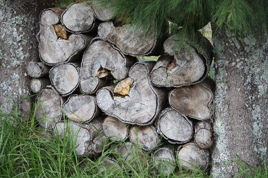 Tikapa Moana Eco Spa Retreat: I love wood