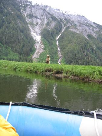 Khutzeymateen Grizzly Bear Sanctuary: thats the fron of the boat and yes we got even closer to this beauty
