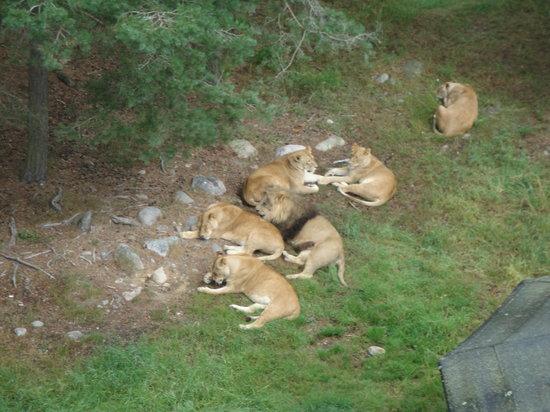Kolmarden Wildlife Park