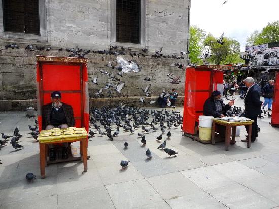 Yeni Cami: Pigeon feeds vendor