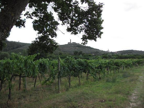 Agriturismo La Pievuccia: Vue sur le vignoble de la Pievuccia e sur il Castillo