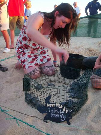 Санта-Мария, Кабо-Верде: A guest helps release her adopted baby turtles