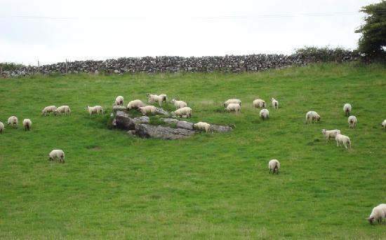 Hill View Farm: the sheep