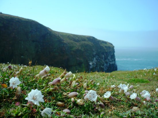 Skomer Island, UK: Wick valley: thousands of seabirds nesting on that cliff in the distance! Amazing!