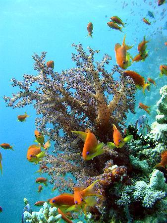 Pharaoh Dive Club: Soft Corals