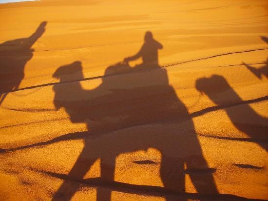 Auberge Chez Tihri 'Suerte Loca': Camels 2