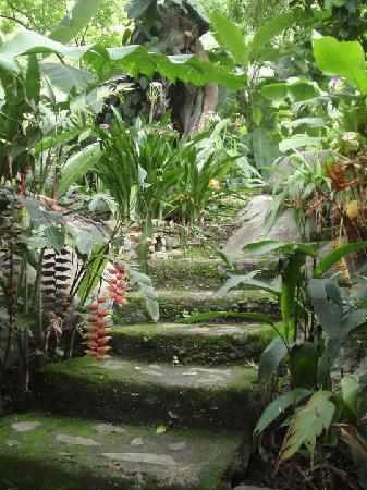 Ecohostal Yuluka: Muy verde el paisaje dentro del hostal