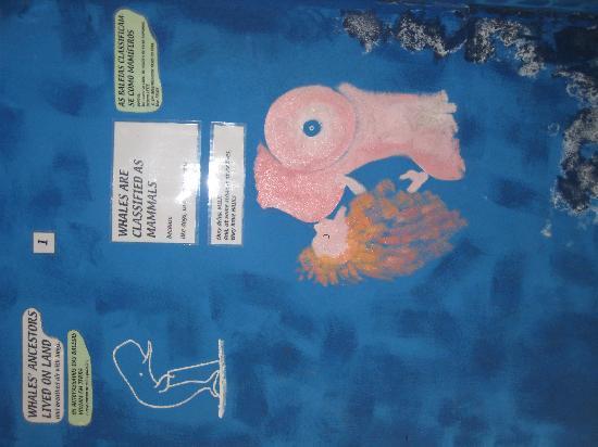 Malcolm Museum : liebevolle Wandmalereien wie kl. Wale entstehen