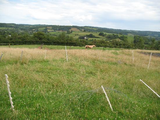 Castle Farm B&B: horses in the field
