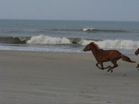 Breaking Into A Gallop Picture Of Wild Horse Adventure